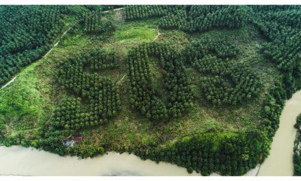 SOS y la protección del orangután