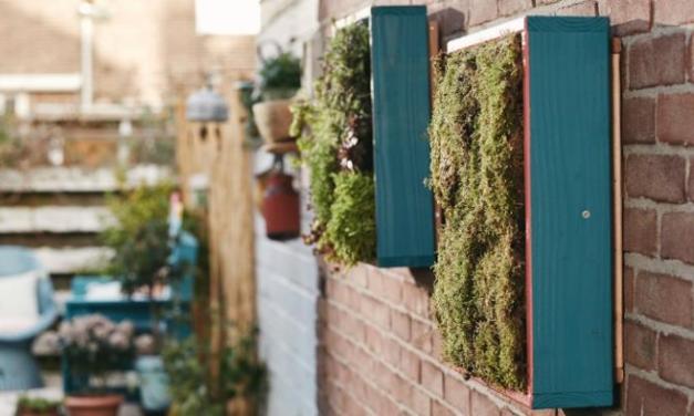 Construye un jardín vertical en tu hogar